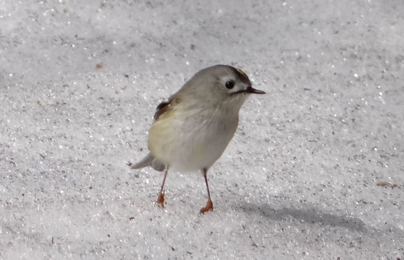 Images of 日本の野鳥一覧
